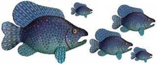 Big_fish_multiple_small
