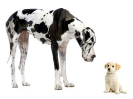 Bigdoglittledog