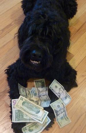 Moneydog3