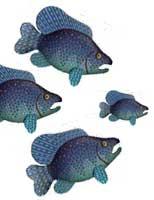 3bigfish1small